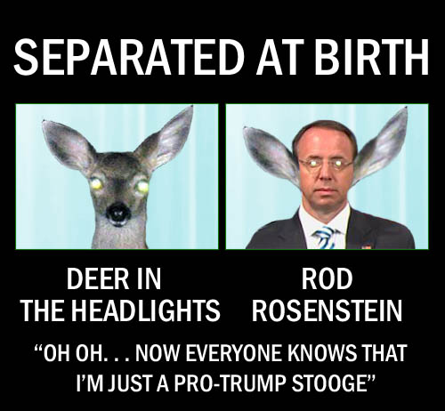 "Deputy Attorney General Rod Rosenstein bears a striking resemblance to a deer in the headlights especially during Bill Barr's deceptive press conference before the release of the Mueller report where he seems to be thinking ""Oh oh...now everyone knows that I'm just a pro-Trump stooge."""