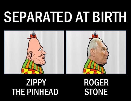 Trump crony, Nixon aficionado and self described agent provocateur (translation: asshole), Roger Stone bears a striking resemblance to another coneheaded being, classic comic strip icon Zippy the Pinhead.